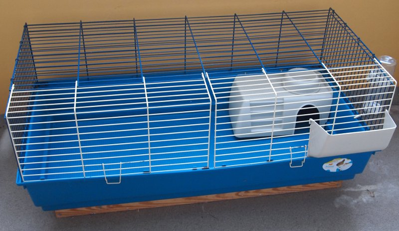 Guinea pig pictures for How to guinea pig cage