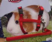 20 mistakes how to kill your pet guinea pig leash publicscrutiny Image collections