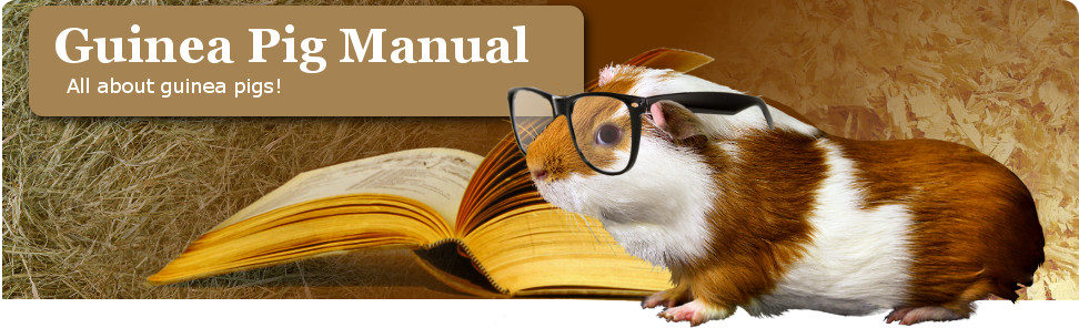 20 Mistakes: How to Kill Your Pet | The Guinea Pig Manual